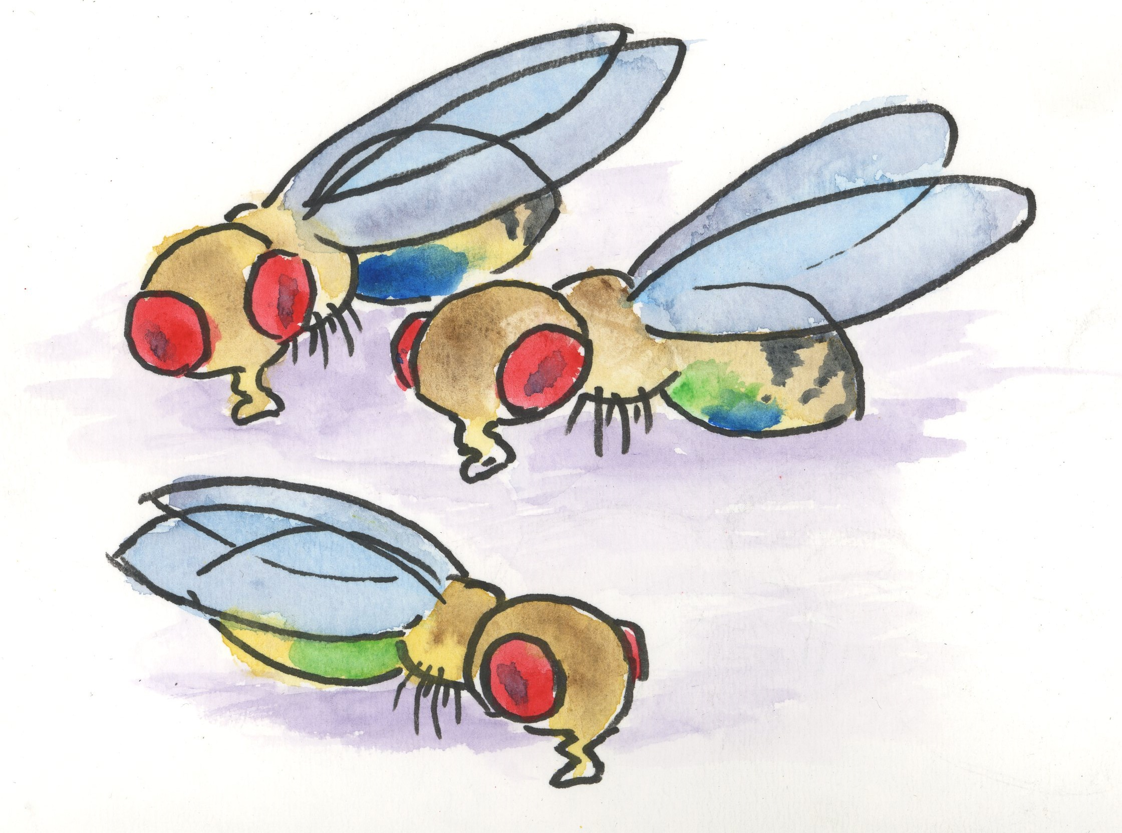 Drosophila Are Cute
